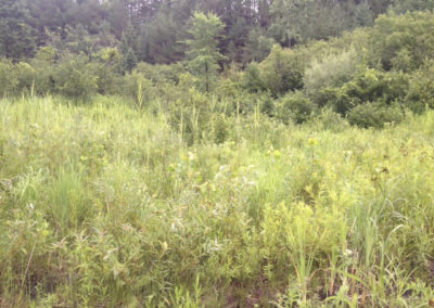 web-Wetlands-phragmites-left of snowmobile path-7-23